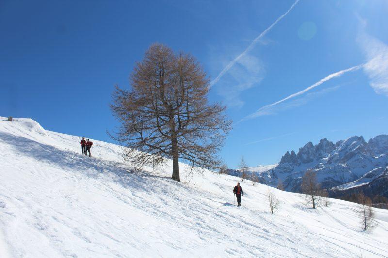 Flora Alpina e Fuciade