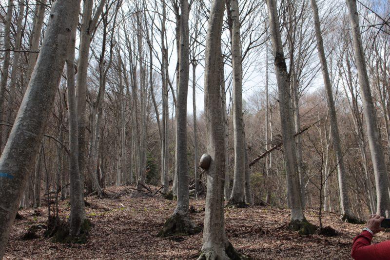 Strada forestale della Pellegrina